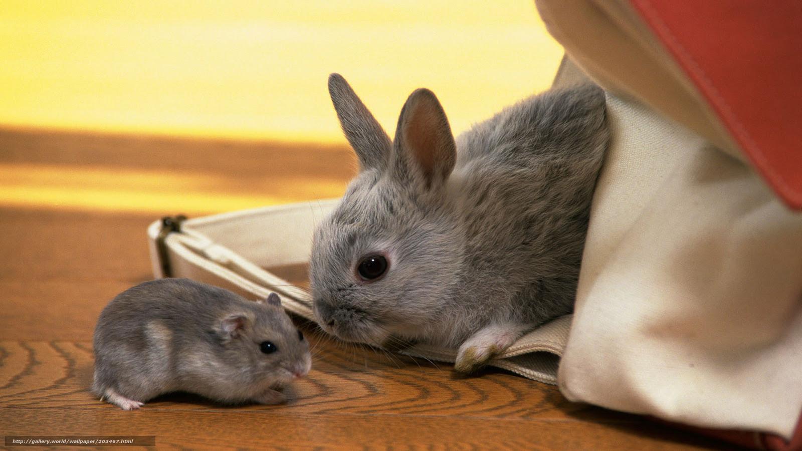 壁紙をダウンロード ウサギ ハムスター グレー 幼児 デスクトップの