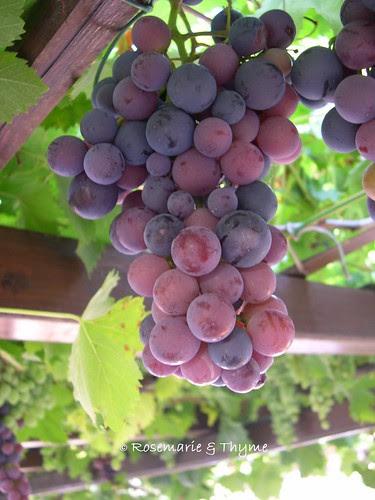 """DSCN6509 - L'uva di Padre Bruno"""""""
