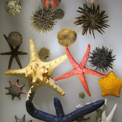 stars and urchins