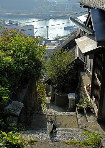 尾道の猫 onomichi