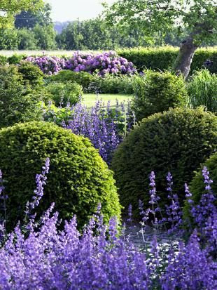 .Modern Country Garden Combos: Lavender And Topiary
