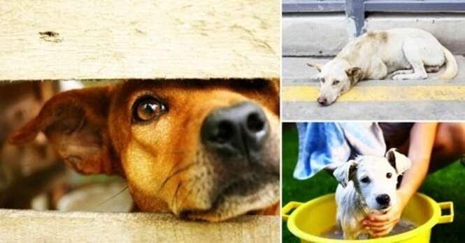 Holanda se torna o 1º país sem cães abandonados