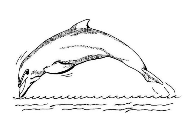 delphine bilder kostenlos
