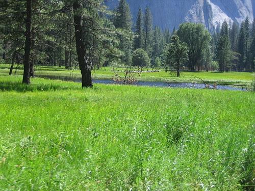 Yosemite Valley floor, June 29, 2005