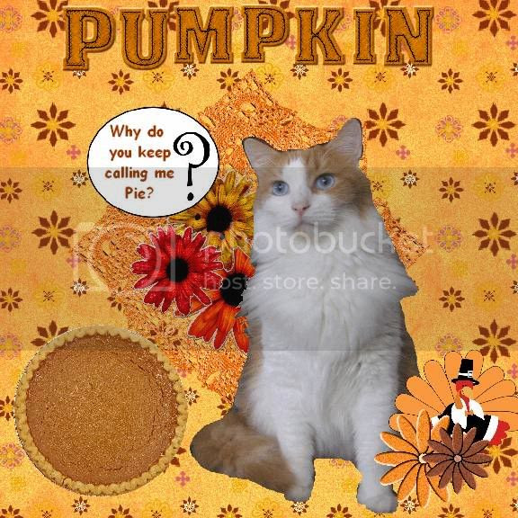 Domestic Cat,Talking Turkey,Bi-Colored Cat