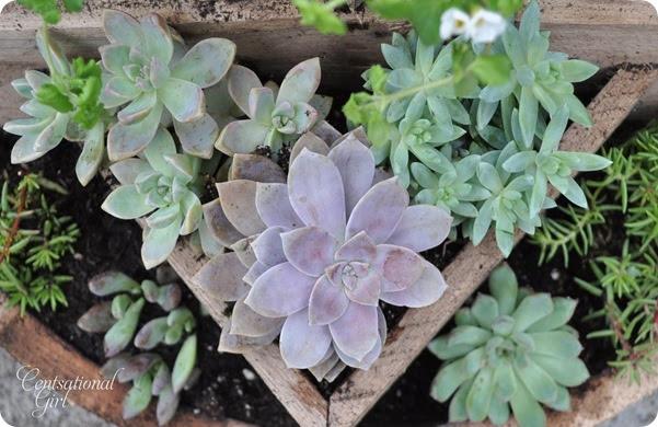 kates-succulents-in-planter6_thumb (601x390, 94Kb)