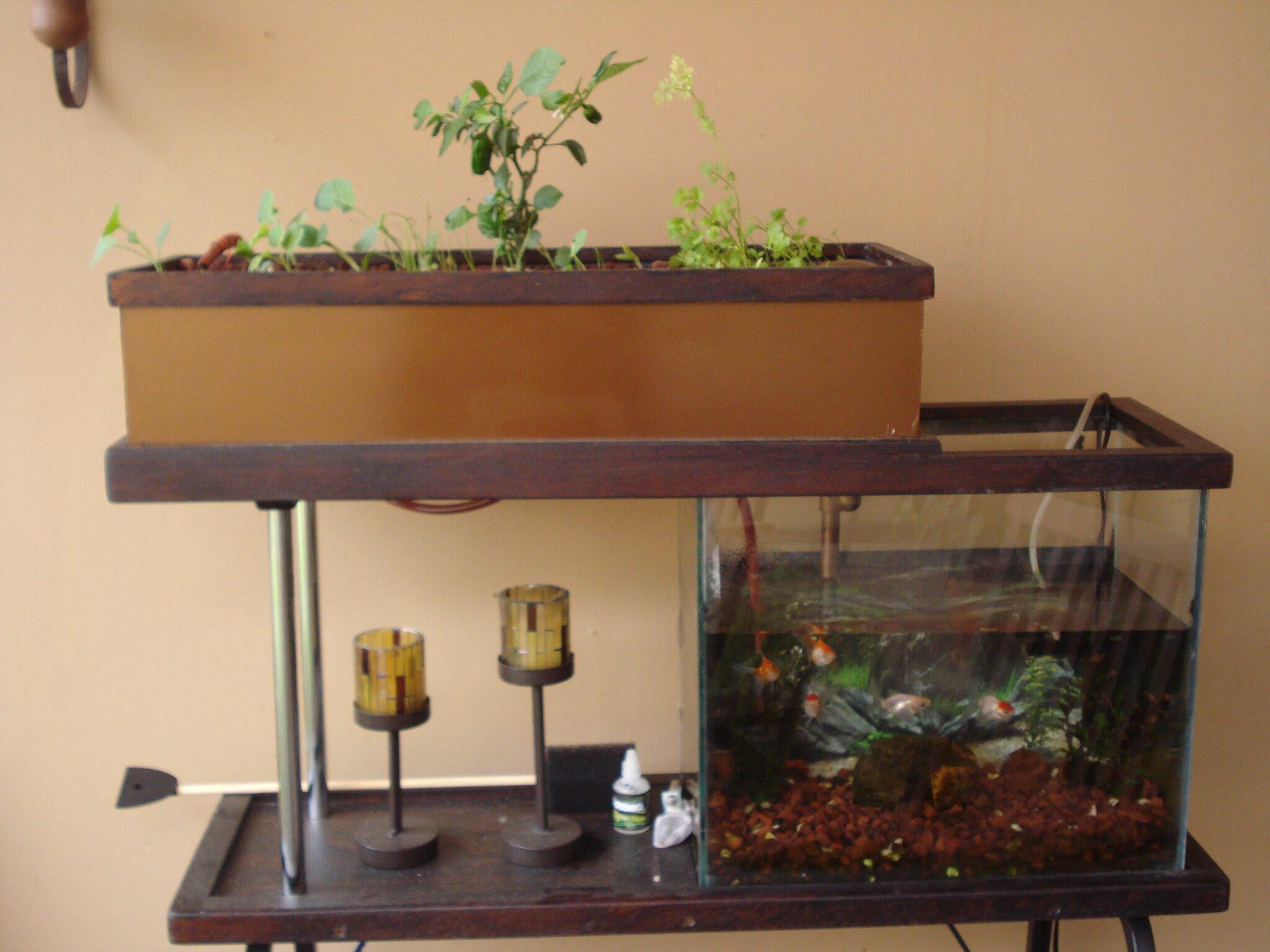 Small Indoor Aquaponics System