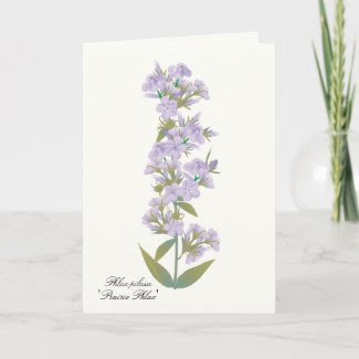 Prairie wildflower greeting/notecard card