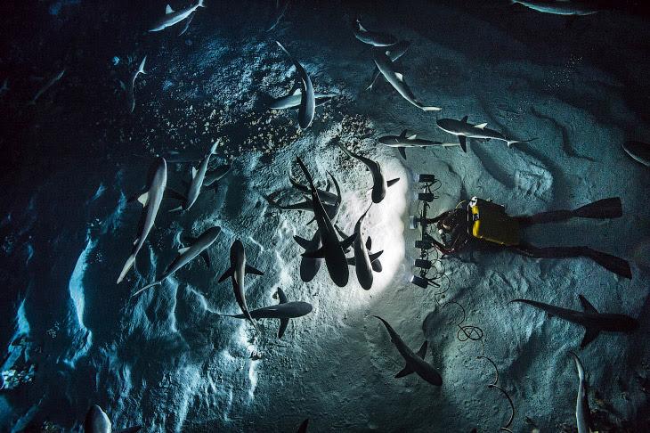 Дивовижні фотографії полюють акул