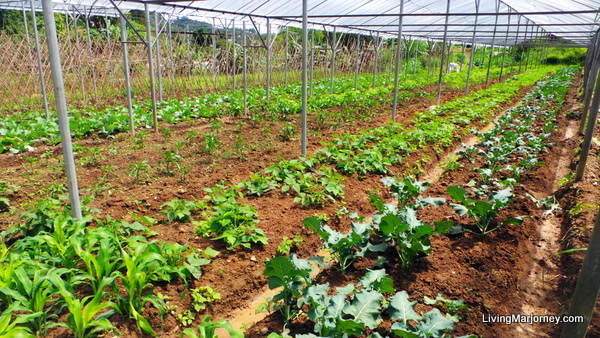 Benguet: Lily of the Valley Organic Farm