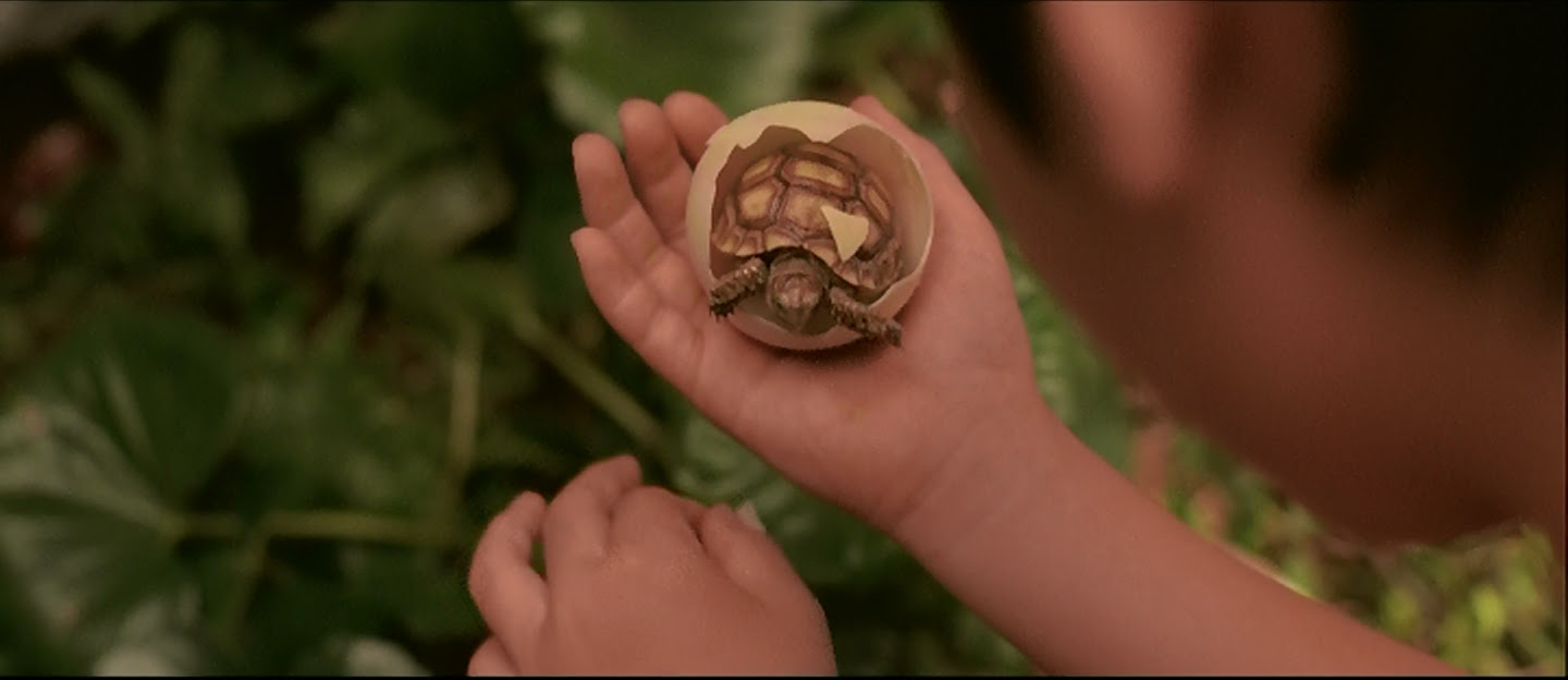 What are the odds I find a turtle in a Gamera film?