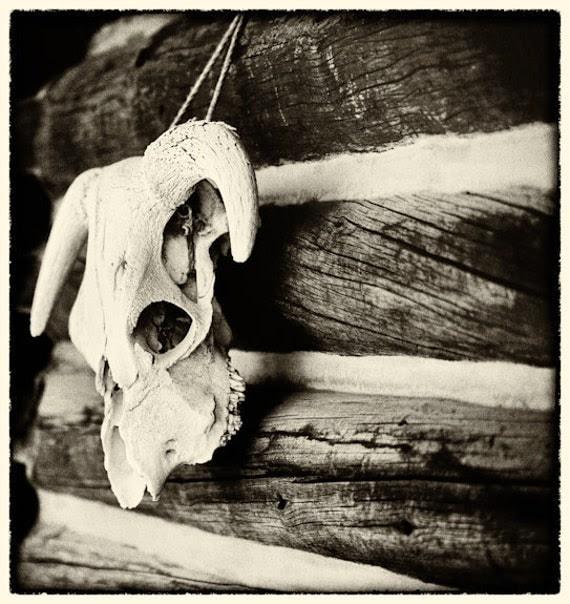 Sun Valley, Idaho, Skull 10 x 7 Fine Art Photo