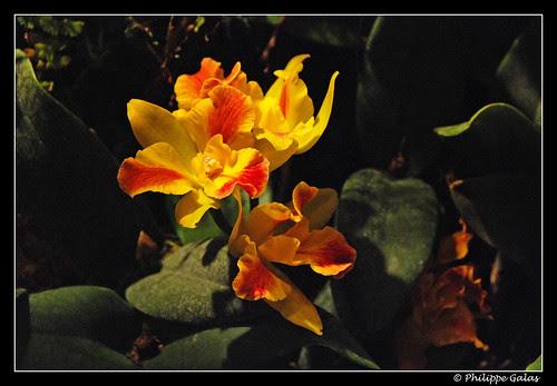 Orchidées Passion 2010