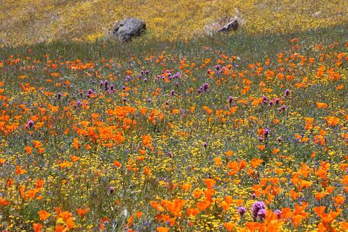 wildflower mix