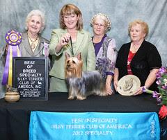 show, dog, dogs, orlando, australian, champion, terrier, silky, 2012, specialty, silkys, stca