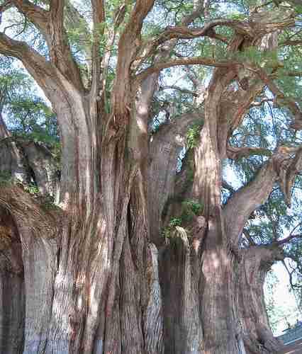 Τα πιο παράξενα δέντρα στον κόσμο