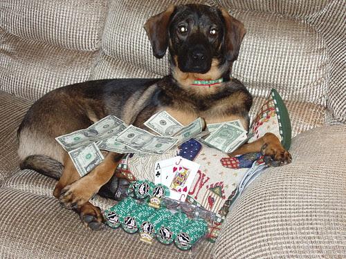 Meet Freddy, the Poker Dog!