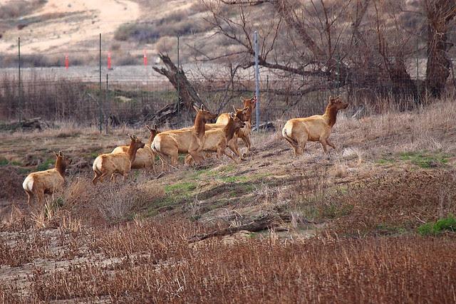 IMG_5726 Tule Elk State Reserve