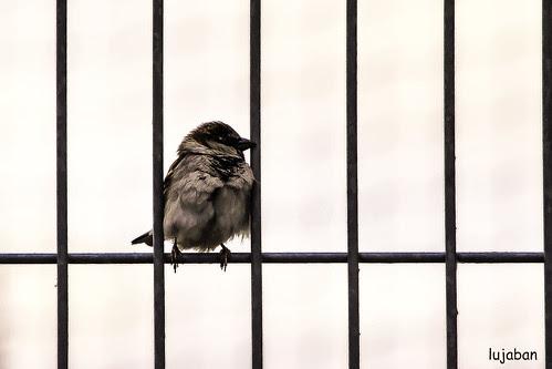 cry freedom... by lujaban