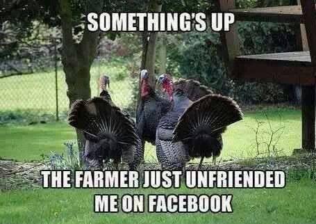 turkey farmer facebook, turkey funny, turkey comic