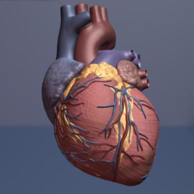 <p>El tratamiento con cardiotrofina-1 reparó el tejido del corazón de una rata tras un ataque. / American Heart Association</p>
