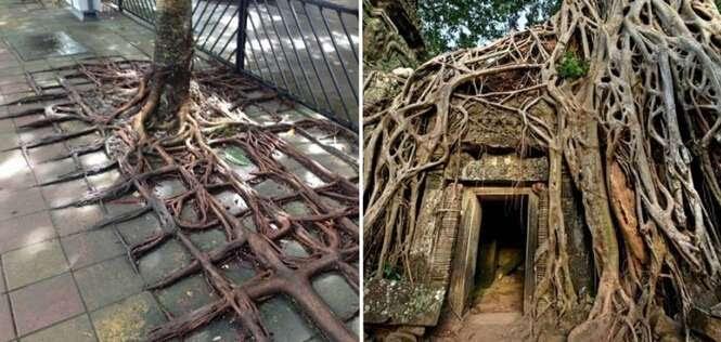 Árvores lutando para reconquistar seu espaço no mundo moderno
