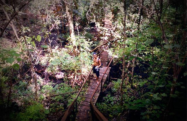 10 2013 04 25_monkey trail.png