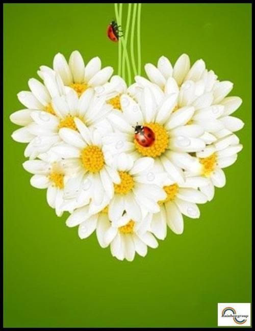 .daisy heart with ladybugs