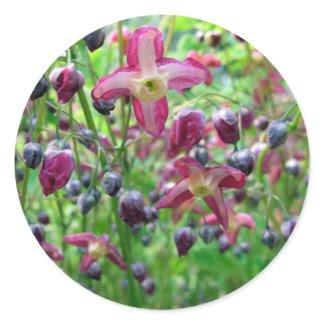 Epimedium Flowers sticker
