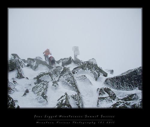 Four Paws on Adams: Winter Mountaineering in the Northern Presidential's