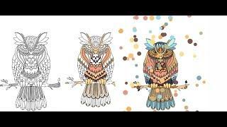 All Clip Of Mewarnai Burung Hantu Bhclipcom