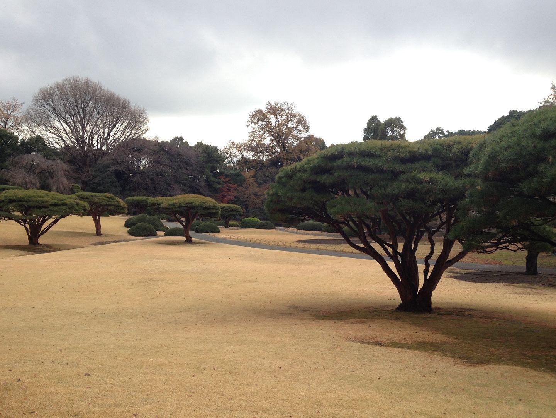 Shinjuku Gyoen National Garden, Tokyo, Japan photo 2013-12-20104830_zpsd9b5fde4.jpg