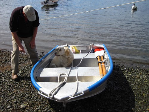Castro dinghy dog