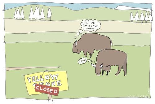 Yellowstone buffalo roam  by douglaswittnebel