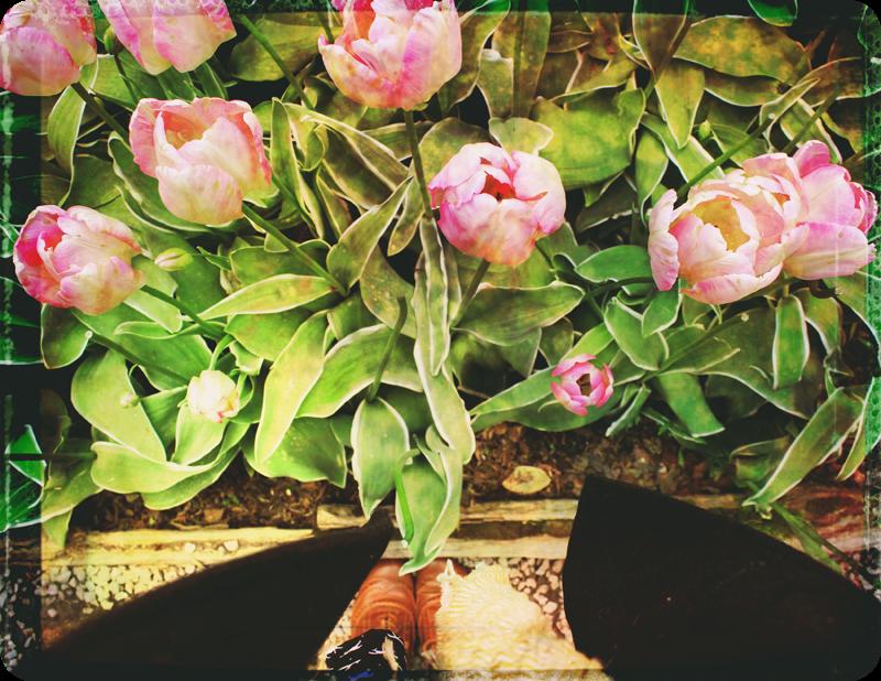 {layout} tulips! | photo background