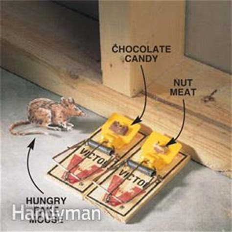 How to Keep Mice Away and Have a Mouse Free House   Family Handyman