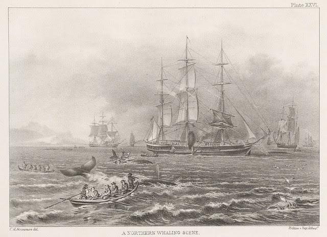 whaling - whales - sea mammals - cetacea