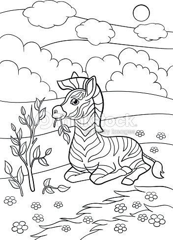 Dibujos Para Colorear Cebra De Lindo Bebé Poco Se Encuentra Y Come