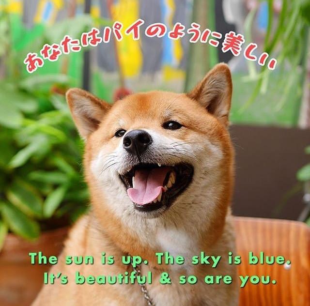 Happy Doggo Makes A Happy Day Meme By Kittysmiiles Memedroid