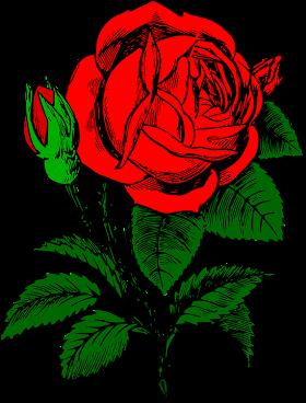 Gambar Bunga Mawar Merah Vector