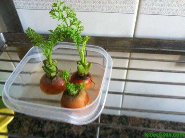 IMG 0728 Recreciendo plantas