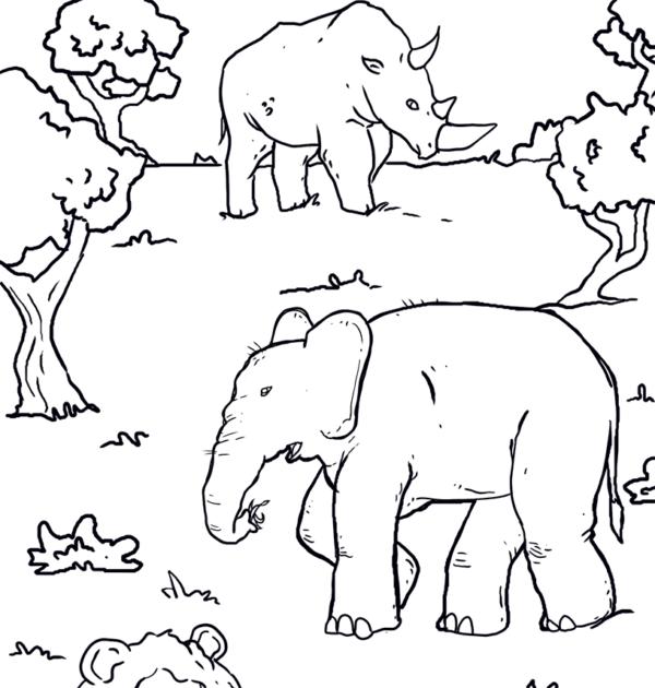 ausmalbilder kostenlos tiere afrika
