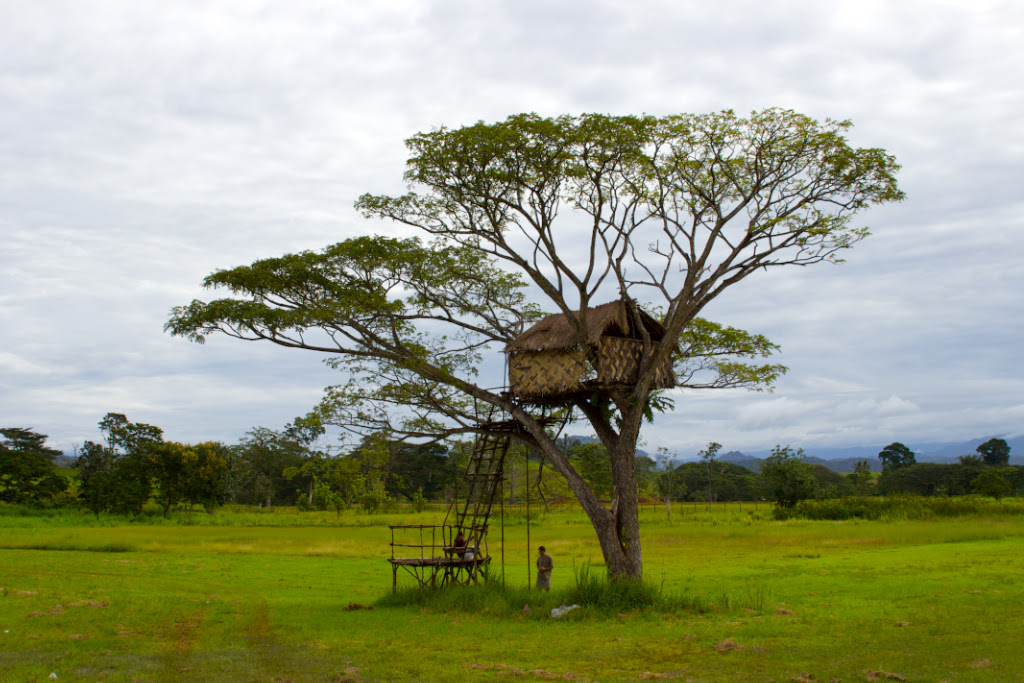 Traditional tree house