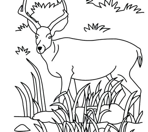 grassland animals coloring pages sketch coloring page