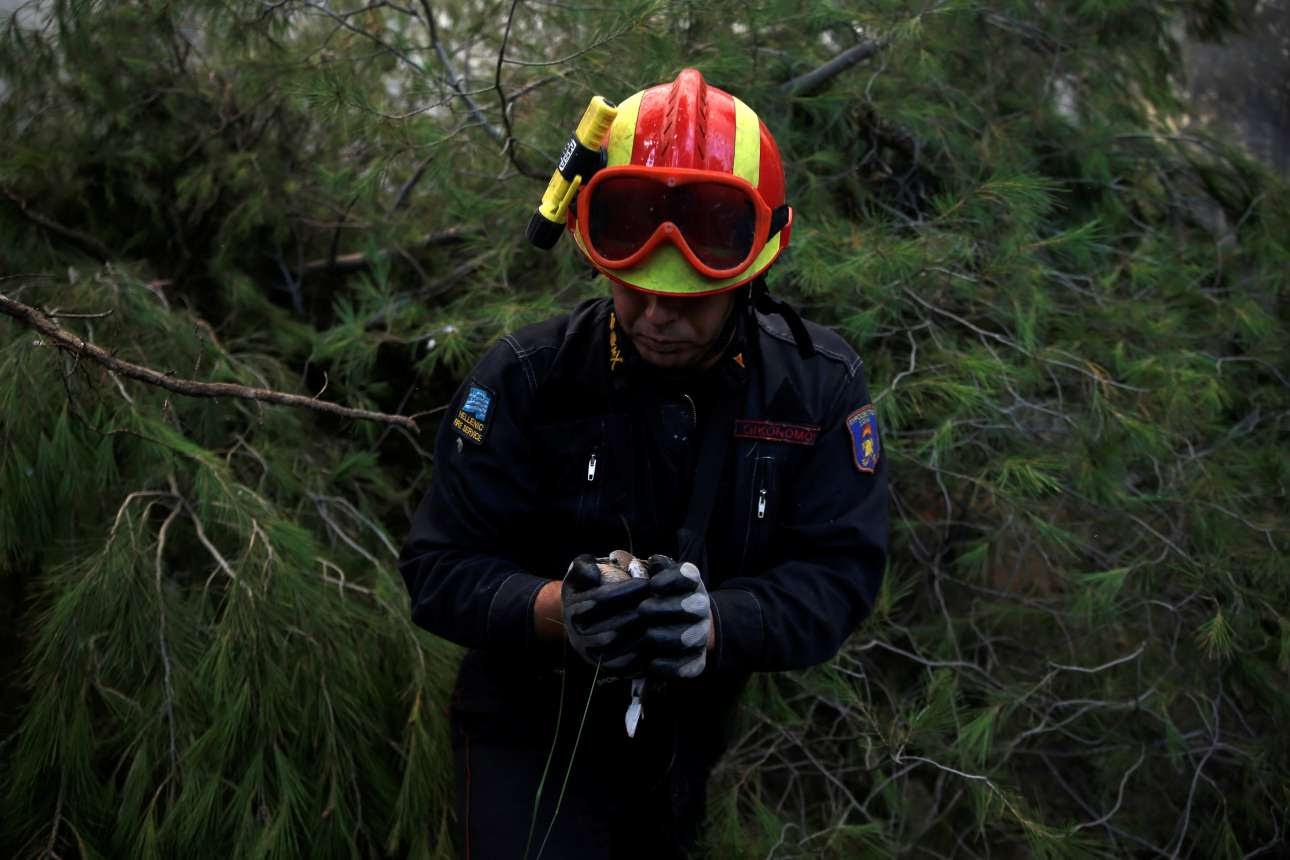 Ενας πυροσβέστης έχει μόλις σώσει ένα πουλάκι που είχε παγιδευτεί στα κλαδιά, προτού έρθει να τα κάψει η φωτιά...