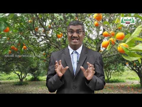 Class 9 English Unit 4 Poem Seventeen Oranges Kalvi TV