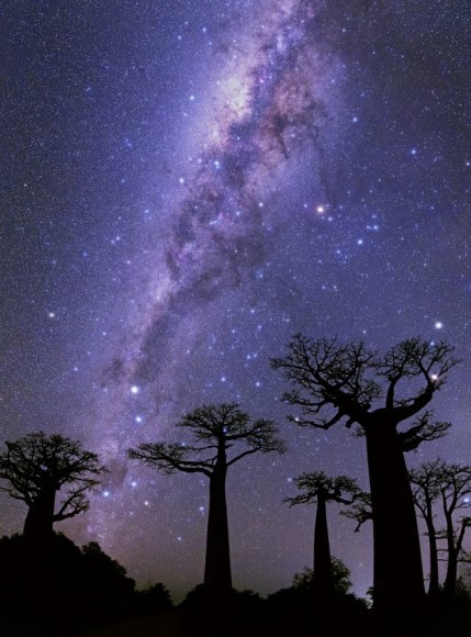 PNA 2014 - First in the 'Espoir' (hope) category: 'Milky way over Baobabs.' Credit and copyright: Mohammad Taha Ghouckkanly/PNA.