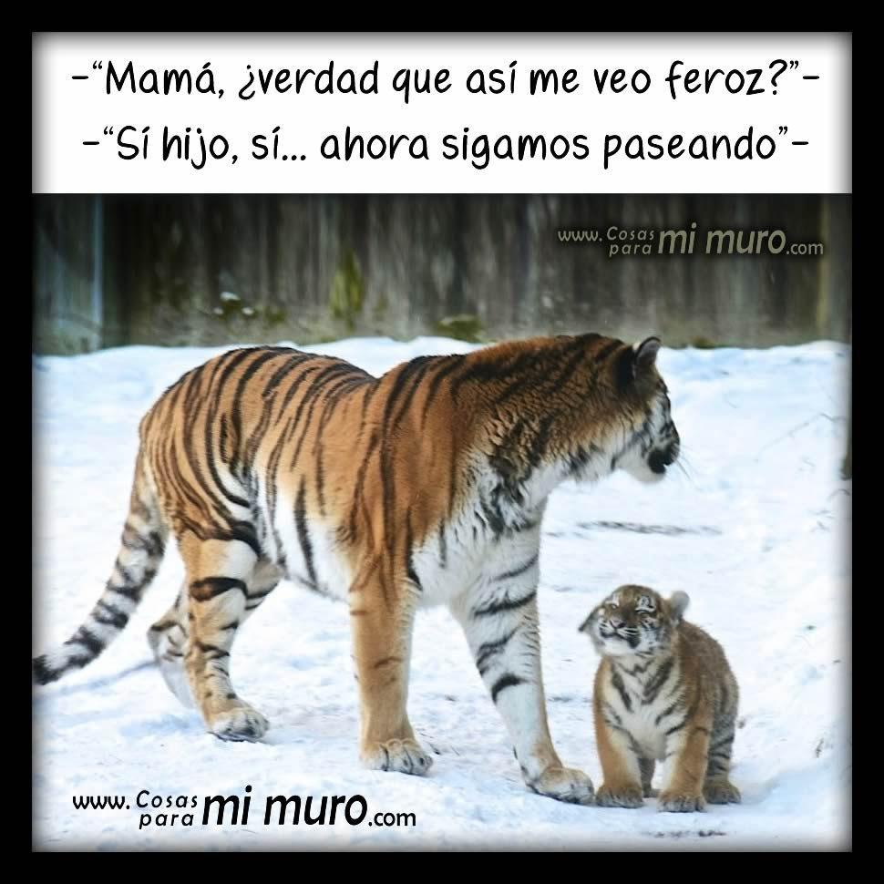 Imagenes Tigre Y Amor Cosas Para Mi Muro