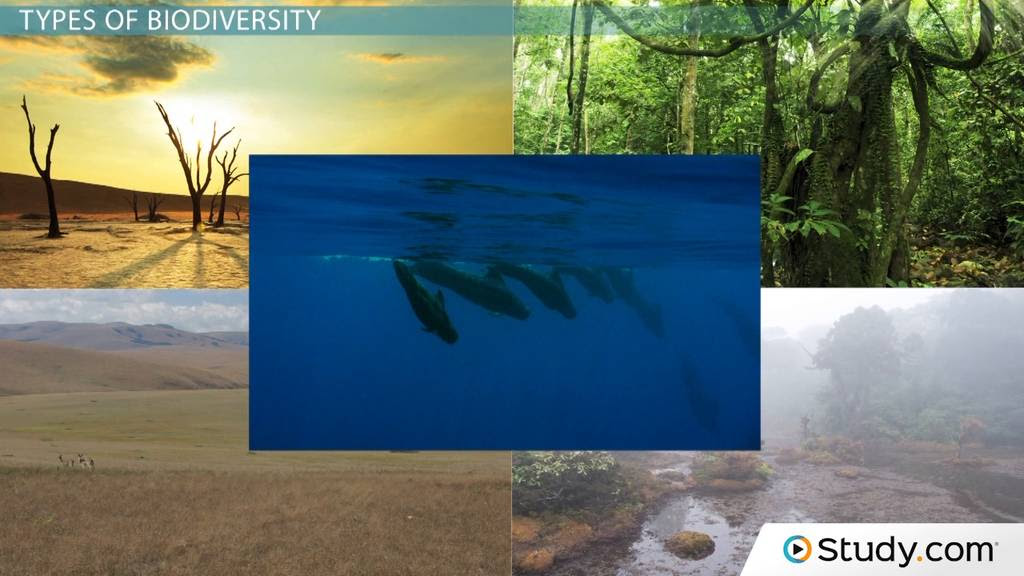 What is Biodiversity? - Definition and Relation to Ecosystem Stability - Video & Lesson