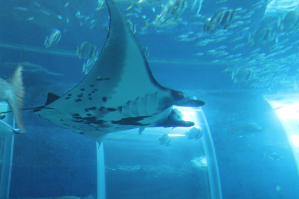 S.E.A. Aquarium in Singapore